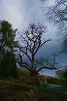 Tynan Abbey Cottages by ottomatt