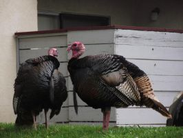 Tukey Male Side Reference by Armadeo