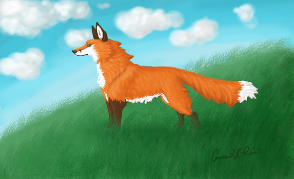 Fox on Watch by oemac25