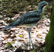 Curlew 01 by Indefinitefotography