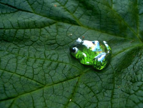 Frog on Leaf by thedustyphoenix
