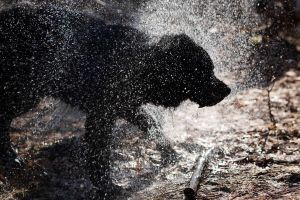 Silhouette of a Wet Dog.... by BlackDogBarnyard