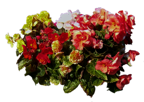 Load of flowers PNG.. by Alz-Stock-and-Art