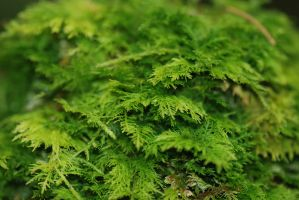 green moss I by linedal
