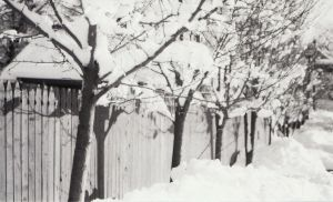 winter fence and trees by SOO2EE