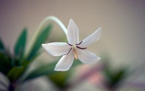 SoloFlower by R-Nader
