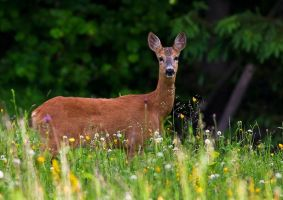 Deer between flowers by lica20