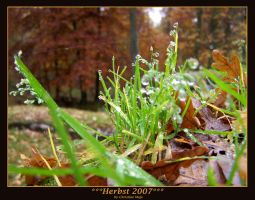 Herbst 2007 by kine80