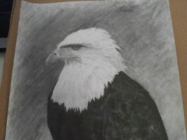 Eagle by CelloChess