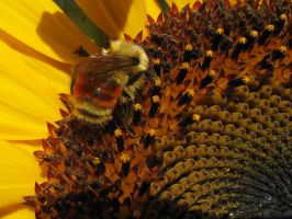Bumble by lonnietaylor