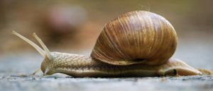 Snail by davos80