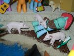 Acquainted With the Local Pigs by SilverBand7