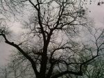 Leafless tree by LeCorbeauGris