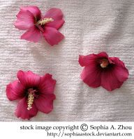 stock 18 : pink flowers by sophiaastock
