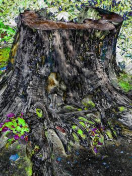 A Tree Stump In The Forest Of Fairy Folklore by aegiandyad