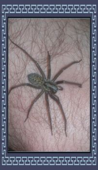 Resident Spider by PhotoMisfit