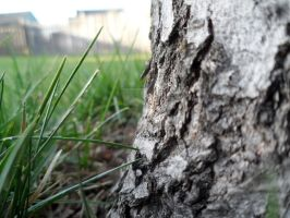 Maple Bark and Blades of Grass by TheBirdsFeathers