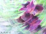 Whirl Wind Irises by christiline88