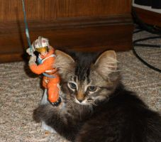My Kitten VS Luke Skywalker by AG88