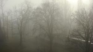 Trees In The Fog by NeonBow