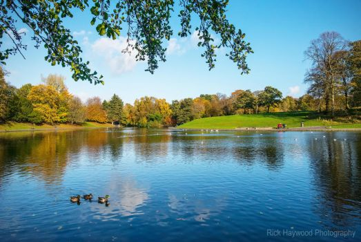 Autumn in the Park 180-13n by Haywood-Photography