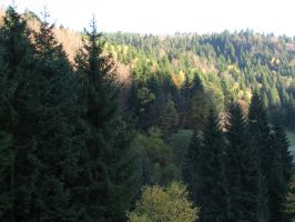 Stock - Black Forest 001 by ladykraut
