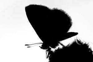 A butterfly silhouette by aronbrand