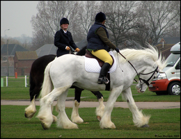Shire Horse Show: Ridden 9 by ladyepona