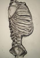 rib cage for class by killaCaravagio
