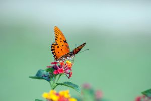 Hello Butterfly by justanewb42