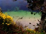 Point Lobos Serenity2 by designdiva3