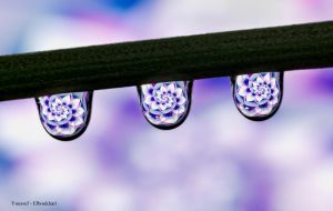 Drop 7 by youssef401