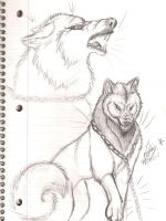 Snarling Wolf by Fellixe