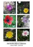Old Perithia Flower Series by madragonn