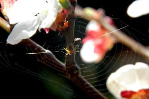 spiders web by LosAnnas