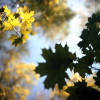 Middle format leafs by elhoff