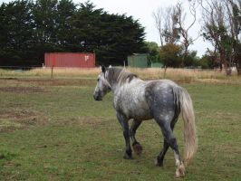 percheron stallion 3 by can-of-shapes