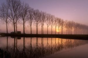 Trees in a mirror........... by Betuwefotograaf
