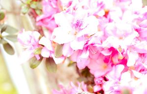 Overexposed dream by cathyss02