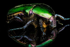Junebug Reflection I by dalantech