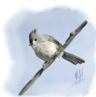 1 Hour Titmouse by Yggdrassal