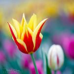 .:Spring Colors:. by RHCheng