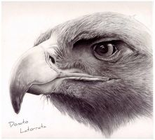 The Eagle - DonLatArt by DonLatArt