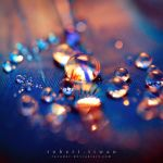 Droplets by ravador