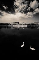 swans and the city. by intrados