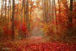 Fog in autumn forest by valiunic