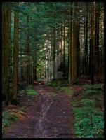The Forest Path by Delillah