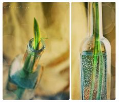 Green positive with vials by Anti-Pati-ya
