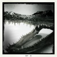 alligator head by Ruben-P
