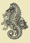 Seahorse by monologish